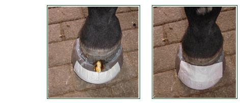 pferd arthrose hufgelenk